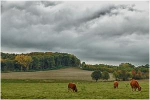 Herfst - Autumn
